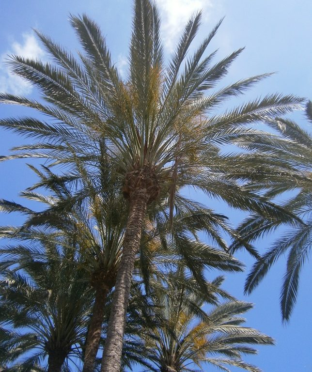 7 Places to Visit in Gran Canaria, palm tree, sun