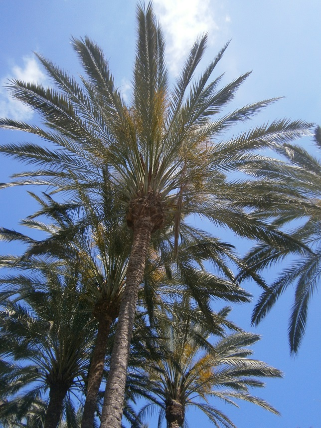 7 Places to Visit in Gran Canaria, palm tree, sunny holiday