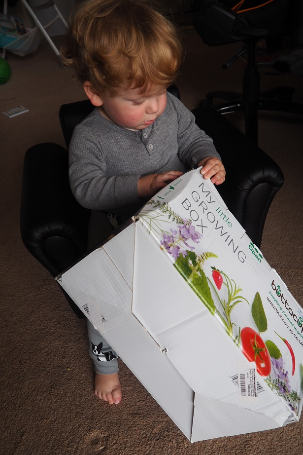 Buttacup Grow Kit Review , Giveaway, children gardening