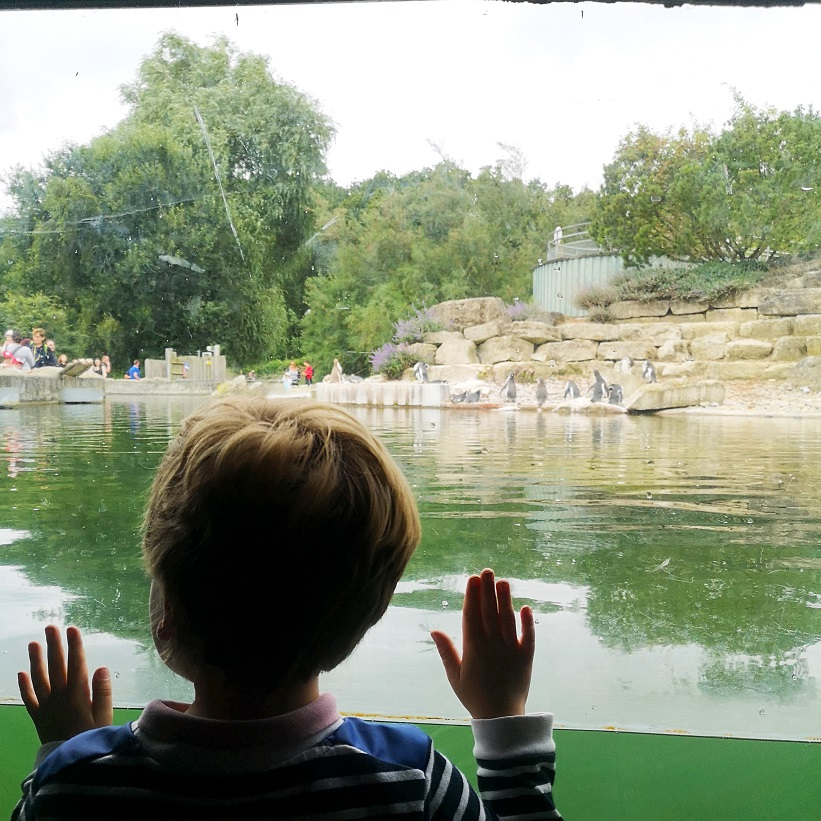 August 2021, Monthly Highlights, Summer 2021, the Frenchie Mummy, Marwell Zoo
